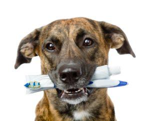 dental (1)